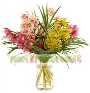 Orhidee cymbidium mix