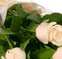 11 Trandafiri crem