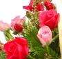 Cos trandafiri mix
