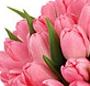 Cub lalele roz