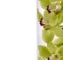 Orhideea cymbidium in vaza
