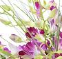 Orhidee thai