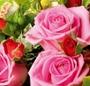 Spectacol floral