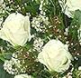 Trandafiri cu gypsophila