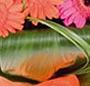Buchet gerbera multicolore