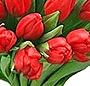 Buchet 49 lalele rosii