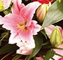 Cantare florala