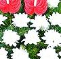 Coroana funerara anthurium si crizanteme