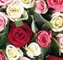 Inima trandafiri trio