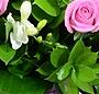 Paradis floral