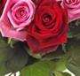 Trandafiri veseli