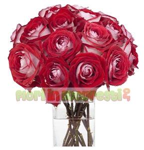 Trandafiri luxor